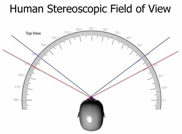 поле зрения у человека